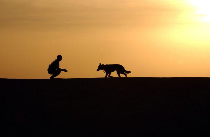 אילוף כלבים – מתן אורח חיים לכלב